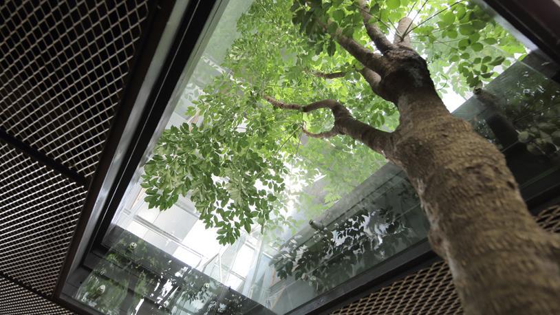 WWF: Yeşil Ofis'te A4 Tasarrufu Apartmana Denk