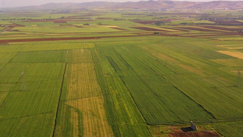 Hazinenin Tarım Arazileri Doğrudan Satılabilecek